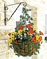 Poppy Hanging Basket