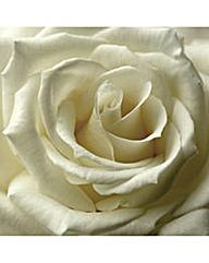 Arthouse Single Rose Canvas