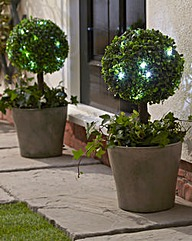 Solar Bay Tree - Buy 1 Get 1 Free