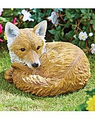 Resting Fox