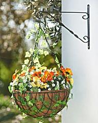 Ready Made Poppy Hanging Basket