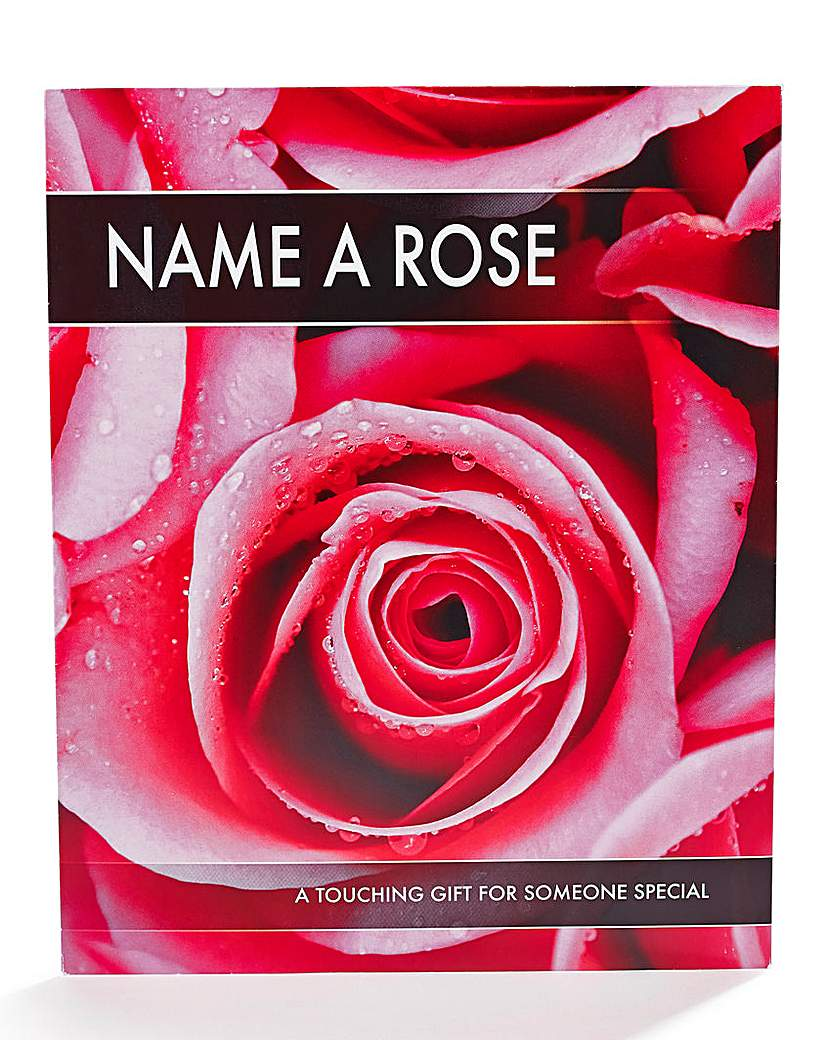 Image of Personalised Name a Rose