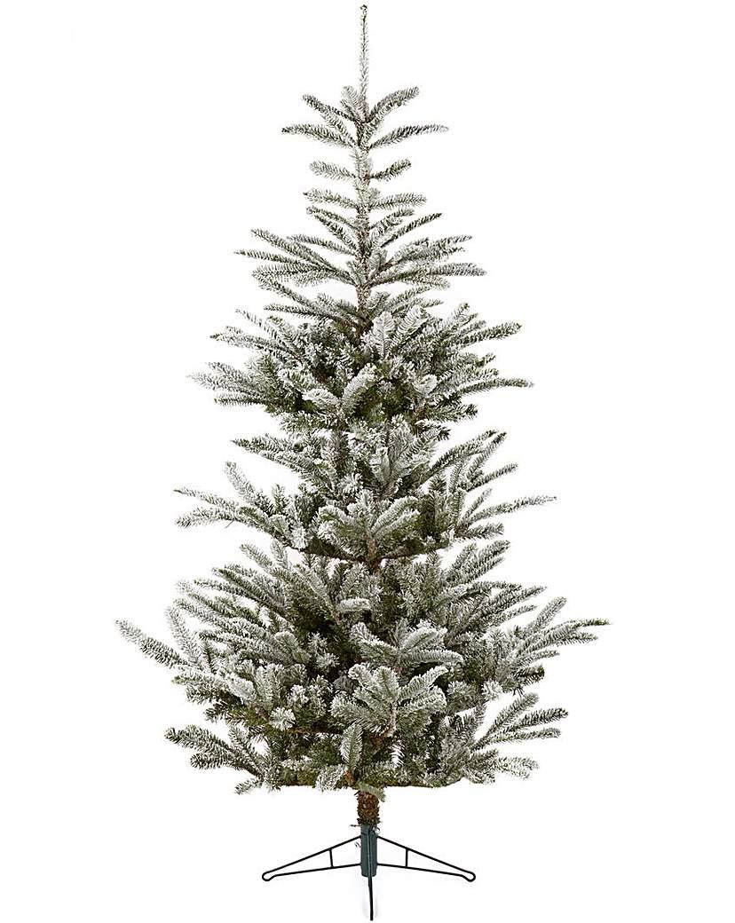 Fresh Snow Fir Tree