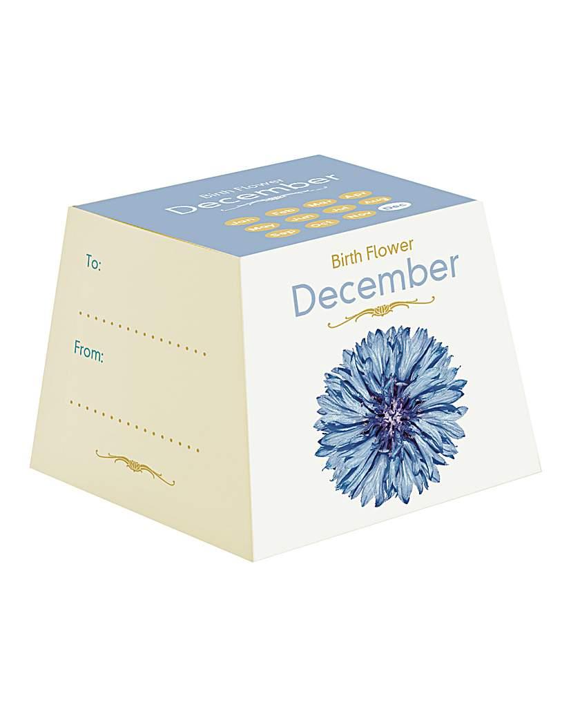 Image of Birth Flowers December