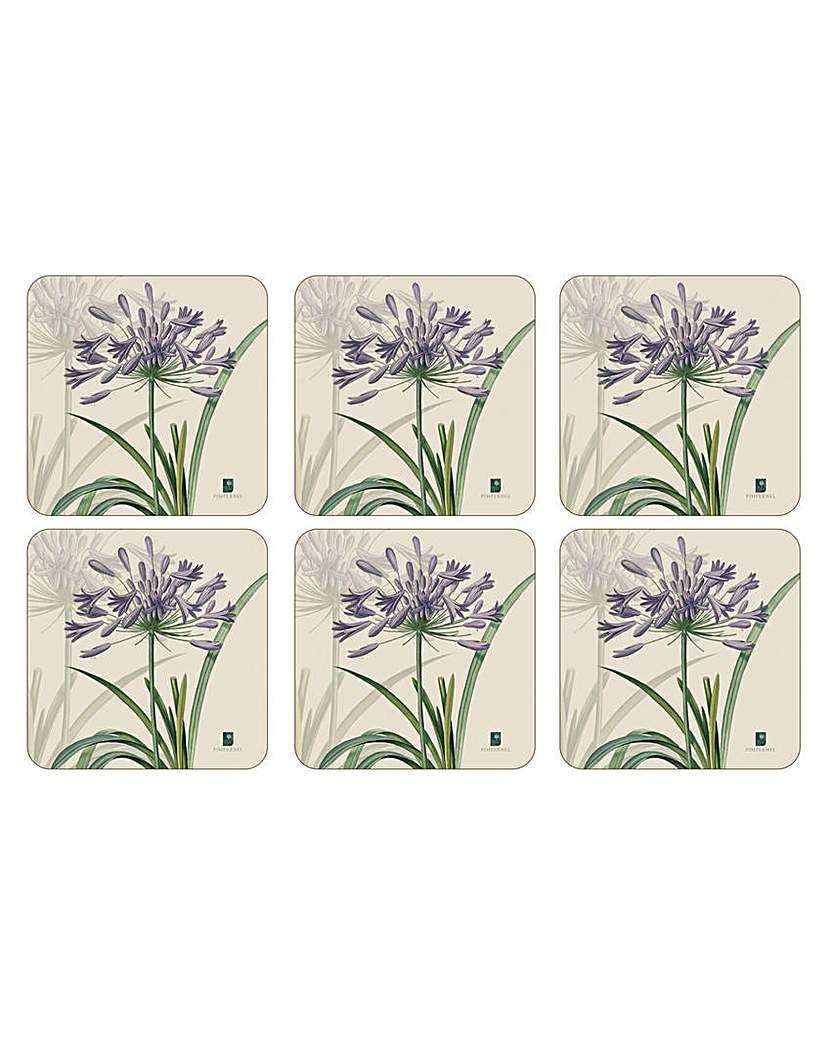 Image of Pimpernel RHS Agapanthus Coasters