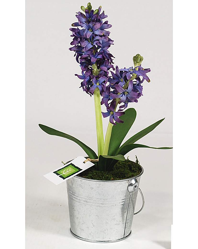 Image of Artificial Plant Hyacinth In Bucket