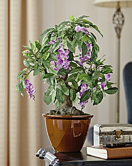 Ever Flourishing Wisteria Bonsai Tree
