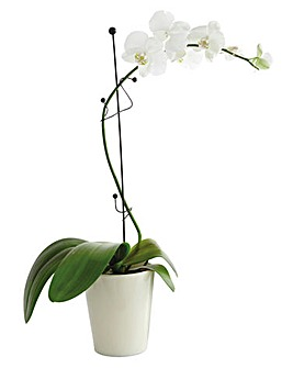 Orchid Twiggy Stake