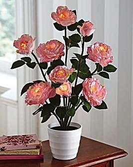 Illuminated Rose Tree in a Pot
