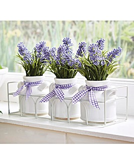 Lavender Pots with Iron Basket