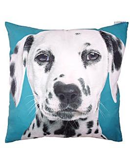Dalmatian Print Turquoise Cushion