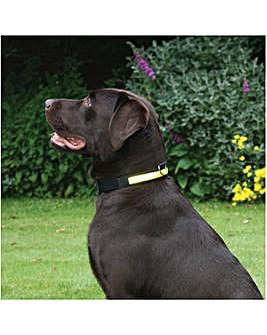 Premium Flashing Collar Yellow Medium