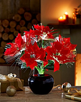 Poinsettia Fibre Optic Plant