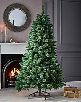 Cashmere Fir Tree