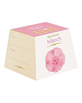Birth Flowers March