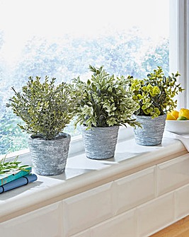 Plants with Stone Effect Pots Set of 3
