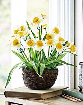 Daffodil Nest