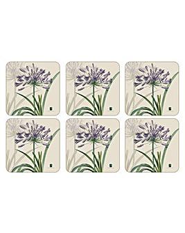 Pimpernel RHS Agapanthus Coasters