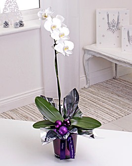 Personalised Christmas Orchid