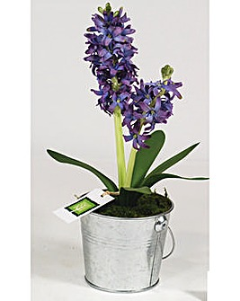 Artificial Plant Hyacinth In Bucket