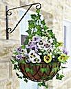 Pansy Hanging Basket