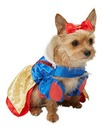 Disney Snow White Pet Dog Costume