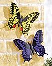Jumbo Butterflies Set 2