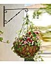 Ready Made Rose Hanging Basket