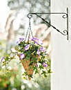Petunia Conical Hanging Basket