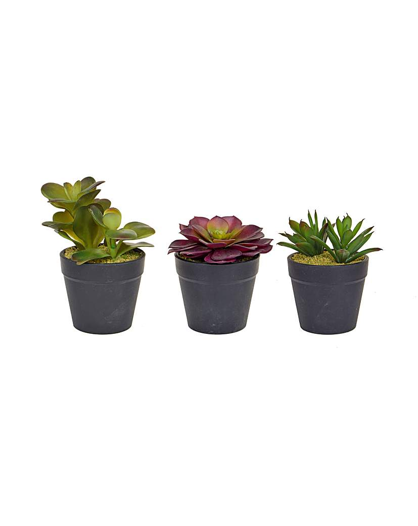 Image of Artificial Succulent Trio