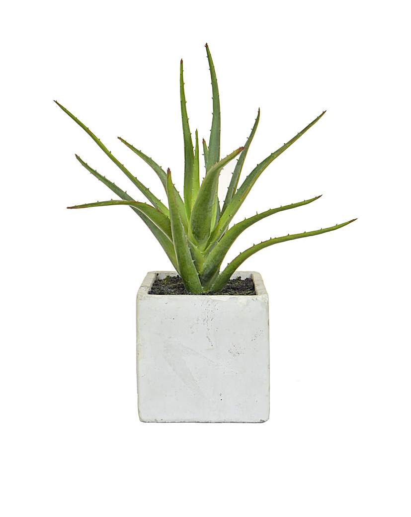Image of Artificial Aloe in Cement Pot
