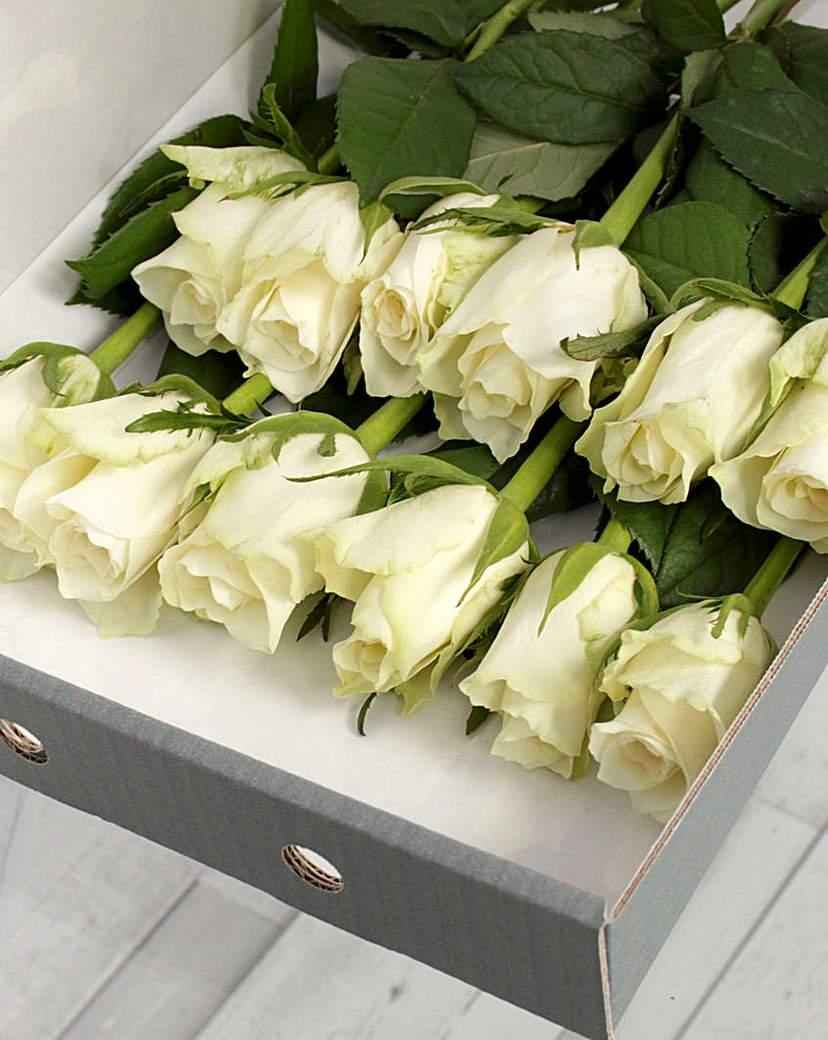 Image of 12 White Letter Box Roses