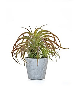 Artificial Succulent Airplant in Pot