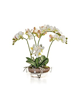 Artificial Phalaenopsis Orchid in Glass