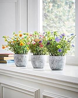 Flower Plants in Pots Set 3