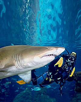 Shark Diving In Cheshire Activity