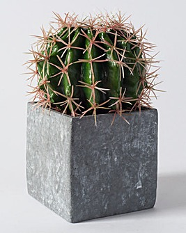 Ball Cactus in Concrete Effect Cube