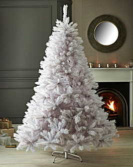 White Spruce Tree With Iridescent Tips