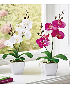 Faux Orchid 2 Pack