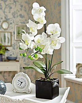 Artificial Orchid with Ceramic Pot