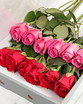 12 Red and Pink Letter Box Roses