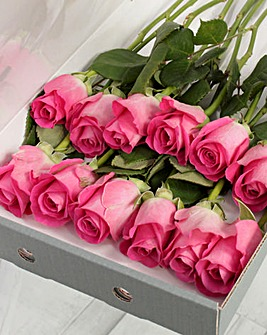 12 Pink Letter Box Roses