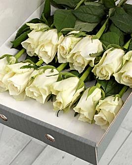 12 White Letter Box Roses